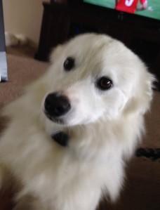Cody 2